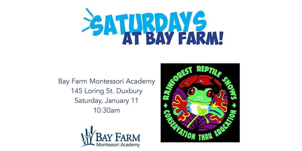 Saturdays at Bay Farm with Rainforest Reptile Shows