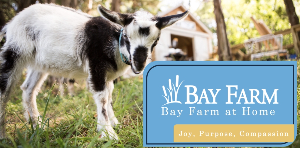 Week 2 of Bay Farm at Home