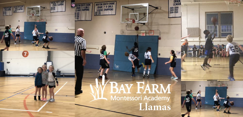 Bay Farm Llamas Finish Basketball Season with 8-2 Record